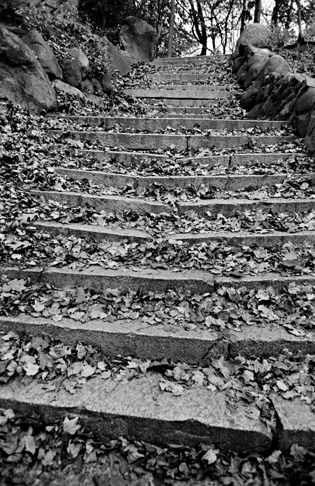 Stairs with Leaves, 1973 by Larry Racioppo