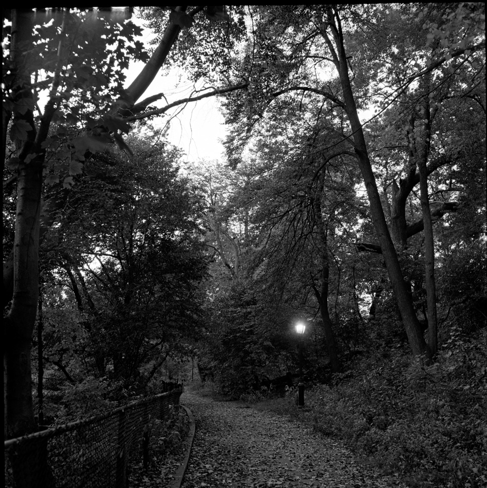 Path at Dusk, 1974 by Larry Racioppo
