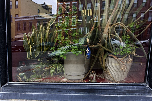 Potted plants in the window of Mystic Essentials of Brooklyn