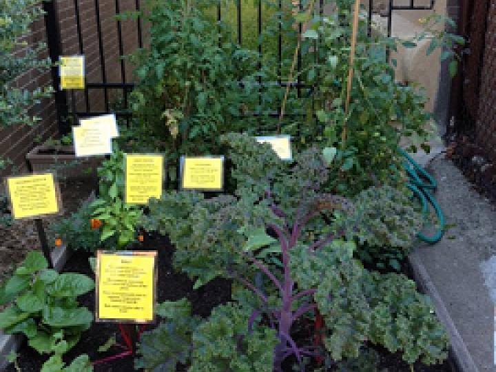 Our Garden Club | Brooklyn Public Library