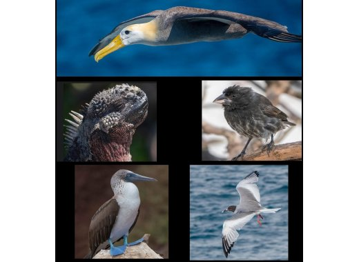 Brooklyn Bird Club Presents: The Galapagos: Home of Evolution