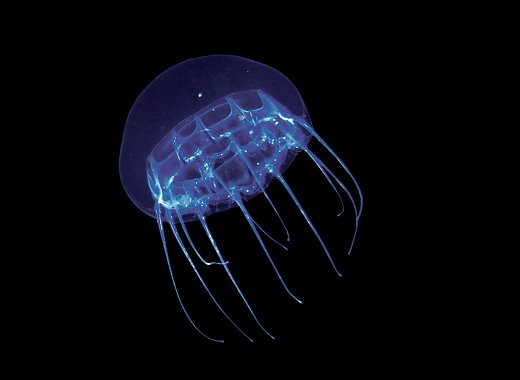 Mysteries in the Midnight Zone with the New York Aquarium