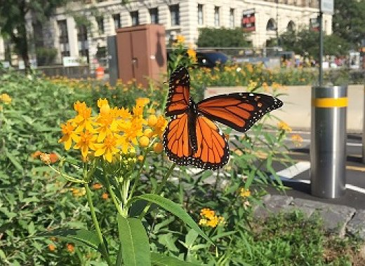 Brooklyn Bird Club Presents: Homegrown Strategies: Saving our Native Flora