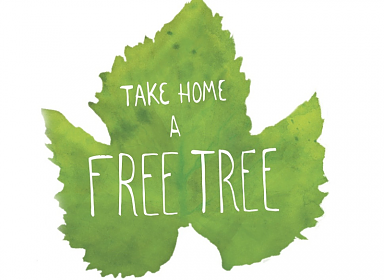 Free Trees at Marcy Library