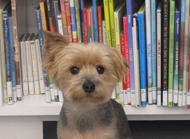 R.E.A.D. Therapy Dog Progam: Come Read to Ziggy!
